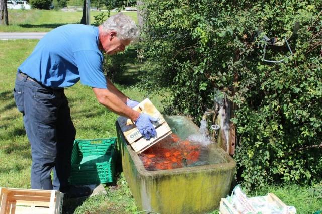 Das Tomatenrätsel - Teil 2